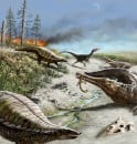 212 million years ago in what is now northern New Mexico, the landscape was dry and hot with common wildfires. Early dinosaurs such as the carnivorous dinosaur in background were small and rare, whereas other reptiles such as the long-snouted phytosaurs and armored aetosaurs were quite common. Image credit: Victor Leshyk