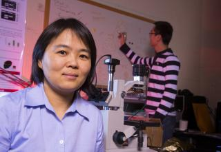 Linxia Gu, associate professor of mechanical and materials engineering, has authored new research showing that blast waves from roadside bombs may impact the brain with greater force than previously believed. Image credit: Craig Chandler/University Communications