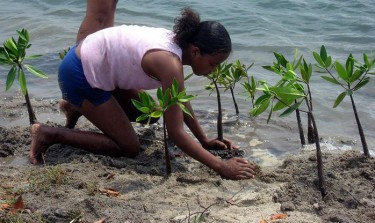 Planting mangroves for coastal protection in Placencia, Belize. Image credit: Nadia Bood