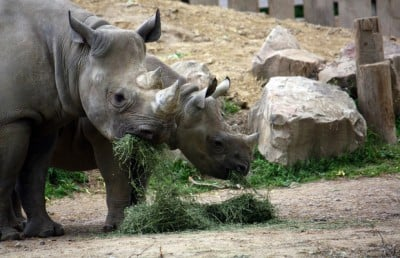 Image credit: Cleveland Metroparks Zoo