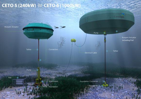 Artist' concept of a series of the Carnegie Wave Energy's tidal system, where buoys anchored to the sea floor and use swells to move a series of pumps. Credit: Carnegie Wave Energy