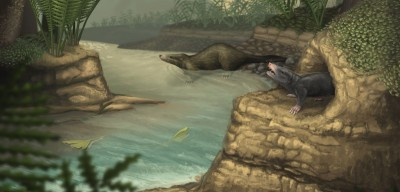 Illustration showing docodonts, now extinct mammals that saw an explosion of skeletal and dental changes (including the special molar teeth that give them their name), in the Middle Jurassic Image: April Neander