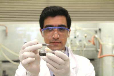 Seyed Mirvakili, lead author of the paper describing the niobium supercapacitors, examines a strand of the material in the lab. Photo: Craig Cheney