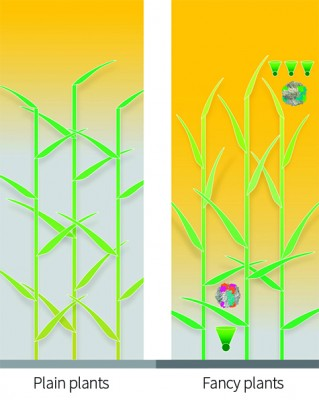In an optimized canopy (right), leaves at the top, which receive too much light, might tilt vertically and  have smaller and fewer light-gathering antennas (green cones) feeding many reaction centers. Those lower in the canopy would have larger antennas feeding fewer reaction centers. The leaves at the top would have a variant of RuBisCO, an important enzyme in photosynthesis, that had high catalytic activity but not be particularly good at distinguishing carbon from oxygen, whereas those at the bottom might have RuBisCO variants that were slower but less inclined to pick up oxygen instead of carbon. Image credit: Zhu et al.