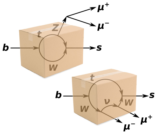 This diagram shows two ways that a b quark can turn into an s quark and μ+μ−. Everything inside the box is fundamentally unobservable, so both of these processes are happening at the same time, like the two states of Schrödinger's cat.