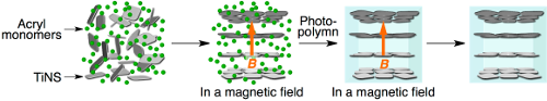 Schematic showing how the electrostatic charge between the nanosheets causes the material to expand in one direction. Image credit: RIKEN