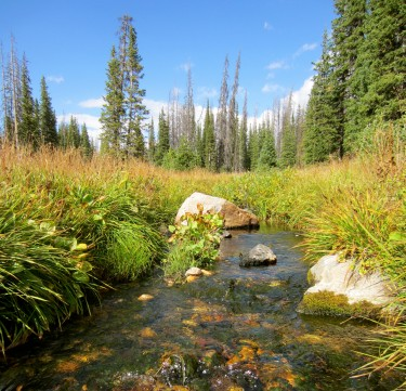 A stream in Wyoming. Image credit: Erin Hotchkiss