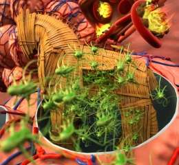 Bacteria switch between antibiotic susceptible-to-resistant states during infection using a Trojan horse strategy. Image credit: Peter Allen