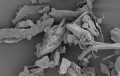 Household dust under a microscope. Image credit: NIAID