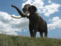 The temperate-zone straight-tusked elephant (Elephas antiquus) is one of the many large mammals that a new study from Aarhus University estimates would have occurred in present-day northern Europe if modern humans had never existed. Unfortunately, the species is now globally extinct and this illustration only a reconstruction. Image credit: Wikimedia Commons