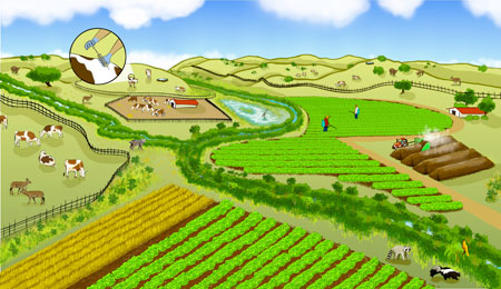 A farming landscape can be co-managed for both produce safety and nature conservation. Promising practices include buffering farm fields with non-crop vegetation to filter pathogens from runoff and planting low-risk crops between leafy green vegetables and grazeable lands. Click image for more detailed description. Image credit: Mattias Lanas and Joseph Burg