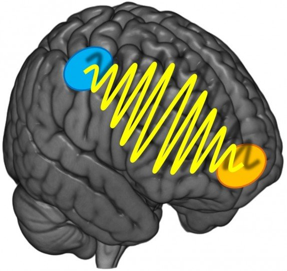Scientists found that preference based decisions rely on communication between two brain areas – the prefrontal cortex located directly below the forehead and the parietal cortex just above both ears. More objective, sensory decisions are not so much dependent on this communication. Image credit: mediadesk.uzh.ch