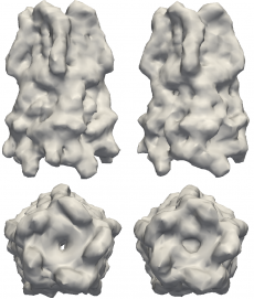 Structures to the left are models of the pentameric ligand-gated ion channel (pLGIC), which mediate fast synaptic communication by converting chemical signals into an electrical response. The structures on the right are reconstructions of pLGIC from FXS data using M-TIP. Image credit: Jeffrey J. Donatelli, Berkeley Lab