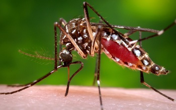 EEID scientists will study the effects of temperature on vector-borne disease transmission. Image credit: CDC