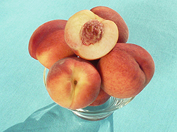 Gulfsnow, a new peach variety developed by ARS and collaborators, will produce attractive fruit with less winter chilling.
