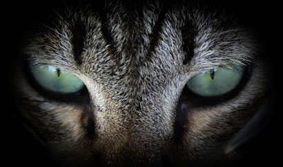 Vertical pupils are very likely to be associated with ambush predators that are active day and night.
