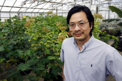Sheng Yang He, Howard Hughes Medical Institute-Gordon and Betty Moore Foundation Plant Biology Investigator, and an MSU Distinguished Professor in the MSU-Department of Energy Plant Research Laboratory. Courtesy of MSU