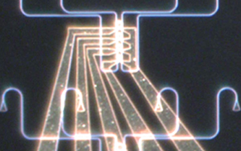 A 100-micrometer view of a silicon photonics platform to support interconnection amongst excitable lasers forming a photonic neural network on-chip. Image credit: Paul Prucnal, Department of Electrical Engineering, Princeton University
