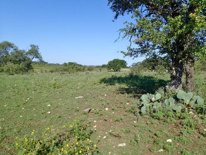 This dynamic landscape near Lampasas bears the marks of complex management changes over time. Image credit: Dr. Matthew Berg