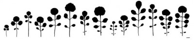 The hairy bittercress (Cardamine hirsuta) develops a great variety of different leaf forms with varying numbers of leaflets: Variation in the fifth leaf in different lineages. (scale bar: 1 centimeter) © MPI f. Plant Breeding Research