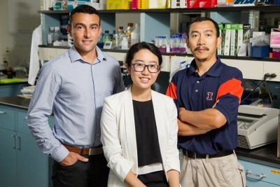 photo of researchers Stephane Lezmi, Huan Wang and Yuan-Xiang Pan New research by, from left, nutritional sciences professor Stéphane Lezmi, doctoral researcher Huan Wang and food science professor Yuan-Xiang Pan found the long-sought link between maternal protein deficiency during pregnancy and problems such as stunted growth and metabolic diseases in offspring. Photo credit: L. Brian Stauffer