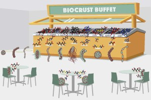 """The Berkeley Lab team examined the diversity of molecules in a biological soil crust (""""buffet"""") and then used exometabolomics to study how bacteria isolated from this soil deplete (""""eat"""") specific molecules. This is analogous to looking at how the buffet is changed after each type of bacteria has eaten its fill. They found that these isolates each target a small and largely non-overlapping fraction of the available molecules. This suggested to the researchers that co-localized microbes avoid eating each other's lunch. Image credit: Zosia Rostomian, Berkeley Lab"""