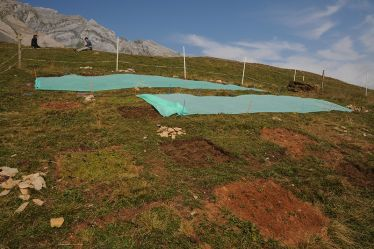 Photo shows an experimental site at 2,000 meters above sea level where indigenous alpine plants face migrant plant competitors. Image credit: Eth Zurich/Peter Ruegg.