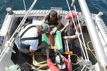 The squid ITAG trials were conducted at the Porto Pim Aquarium with colleagues from the University of the Azores and the Marine and Environmental Sciences Centre in Portugal. Above, WHOI biologist Aran Mooney (at right) and colleagues attach an ITAG to a squid (Loligo forbesi). Image credit: Kakani Katija, Stanford University