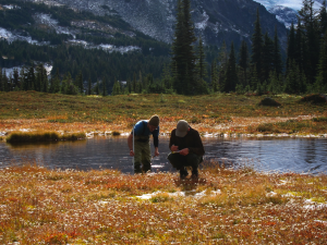 To develop the model, the team collected data for 121 wetland sites in Olympic National Park, Mount Rainier National Park and North Cascades National Park. Researchers monitored each site several times during the summer and fall of 2012. Image credit: Maureen Ryan/University of Washington