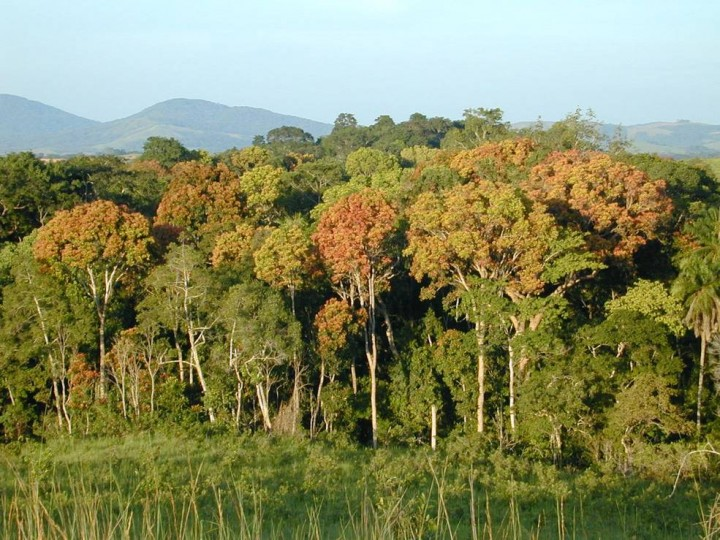 Temperate and tropical forests, such as this one in Gabon, Africa, will be studied by the Global Ecosystem Dynamics Investigation, which will make the first comprehensive, high-resolution measurements of their vertical canopy structure. Credits: NASA/JPL-Caltech