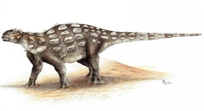 Life illustration of Gobisaurus, an ankylosaur with the stiff tail but no knob of bone at the end. Image credit: Sydney Mohr