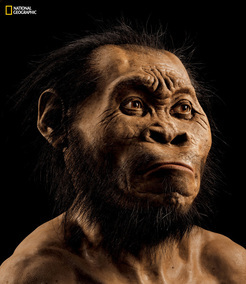 A reconstruction of Homo naledi's head by paleoartist John Gurche, who spent some 700 hours recreating the head from bone scans. The find was announced by the Universityof the Witwatersrand, the National Geographic Society and the South African National Research Foundation and published in the journal eLife.  Photo credit: Mark Thiessen/National Geographic
