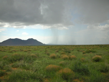 """Heavy rains and droughts are affecting ecosystems in unexpected ways — creating """"winners and losers"""" among plant species that humans depend upon for food. Photo credit: Osvaldo Sala"""