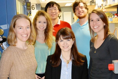 University of Illinois chemists led by professor Christina White (center) developed a new catalyst based on the metal manganese that is both highly reactive and highly selective, traits previously thought to be inversive. Graduate students, from left: Shauna Paradine, Shannon Miller, Jinpeng Zhao, Aaron Petronico and Jennifer Griffin. Photo credit: L. Brian Stauffer