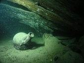 Archaeological underwater findings