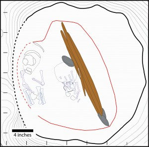 An illustration of an 11,500-year-old grave in central Alaska that contained a rare double burial of two infants dating to 11,500 years ago. Outlines of the two sets of remains are shown at left and center. Also found in the grave were a stone cutting tool, above center, and animal antlers with spear points, right of center. Image credit: Ben Potter, University of Alaska Fairbanks