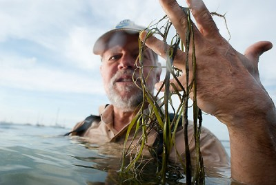 Holding strands of loose native pondweed that floated to the surface, Center for Limnology Director Steve Carpenter is pictured in Lake Mendota just offshore of the UW-Madison campus in 2009. Image credit: Jeff Miller