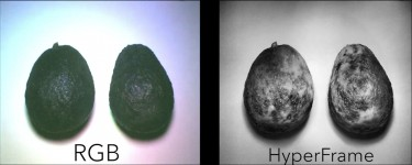 HyperFrames taken with HyperCam predicted the relative ripeness of 10 different fruits with 94 percent accuracy, compared with only 62 percent for a typical (RGB) camera. Image credit: University of Washington