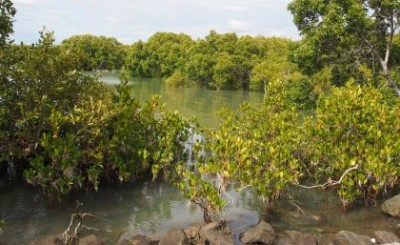 The Indo-Pacific region holds most of the world's mangrove forests. Image credit: University of Queensland