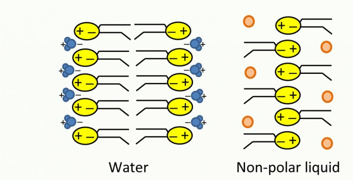 At left, phospholipids are dissolved in water, a polar solvent. They form a bilayer membrane, with their polar, hydrophilic heads facing outward towards water, and their hydrophobic tails facing each other. At right, when phospholipids are dissolved in a non-polar solvent at Earthly room temperature, they form an inside-out membrane, with the polar heads attracting one another, and the non-polar tails facing outwards towards the non-polar solvent. Based on figure 2 from Stevenson, Lunine, and Clancy (2015). Credit: Paul Patton