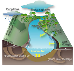 The river corridor includes surface and subsurface sediments beneath and outside the wetted channel. Greater interaction between river water and sediment enhances important chemical reactions, such as denitrification, that improve downstream water quality.