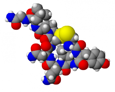 Oxytocin. Image credit: Wikimedia Commons