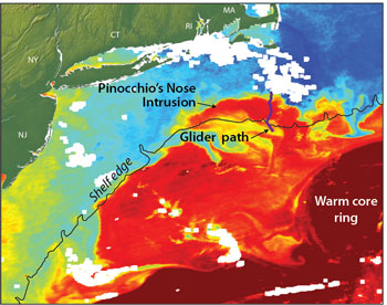 """Satellite imagery shows the exchange of warm core ring water (red) with the colder continental shelf waters (blue). Satellite imagery, however, could not help scientists determine the underlying process for the warm water intrusion; instead they used data from ocean robots or """"gliders"""" recently installed off the coast of Massachusetts. The scientists have dubbed the events """"Pinocchio's Nose Intrusions"""" (PNI) because the warm intruding water continues to """"grow"""" for hundreds of miles, moving in the opposite direction from the northward movement of the Gulf Stream. Image credit:  Jack Cook, Woods Hole Oceanographic Institution"""