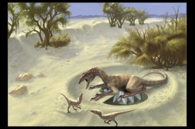 Among the shells studied were specimens dating to 75 million years ago from oviraptorid theropods, small dinosaurs that were closely related to Tyrannosaurus rex and birds. Image credit: Doyle Trankina and Gerald Grellet-Tinner