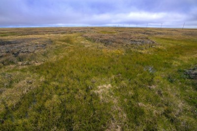 Although permafrost carbon has the potential to be a huge player in the planet's climate, it's difficult to predict the amount that will enter the atmosphere for a given increase in temperature. This photo was taken near Barrow, Alaska. image credit: Berkeley Lab