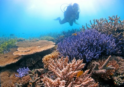 Scientists are using supercomputers to help save coral through bioinformatic analysis of heat-tolerant genes. Image credit: Ray Berkelmans.