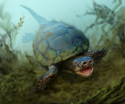 An artist's depiction of the turtle Arvinachelys goldeni as it would have appeared in life 76 milion years ago in southern Utah. Image credit: Victor Leshyk
