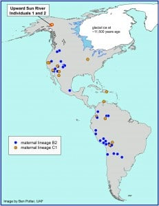 This map shows the location of the Upward Sun River site in Alaska where the remains of two infants were found in an 11,500-year-old burial. A new University of Utah analysis shows the infants belong to two genetic groups or lineages known as B2 and C1. The maps shows other Native American groups throughout the Americas that are part of the same lineages. Image credit: Ben Potter, University of Alaska Fairbanks.