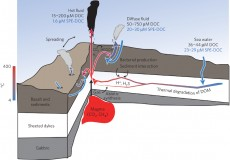 This schematic shows dissolved organic matter dynamics in hydrothermal vent environments.