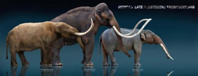 Three elephant ancestors: the mastodon, mammoth and gomphothere. When these animals went extinct, vegetation and small mammal populations radically changed. Sculptures by Sergio de la Rosa